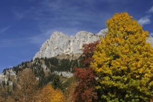 Der Herbst ist die ideale Zeit für Wanderungen im Tannheimer Tal. ©TVB Tannheimer Tal/Wolfgang Ehn