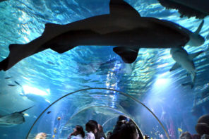 Antarktis am Bodensee – Aufregendes im Sealife-Aquarium