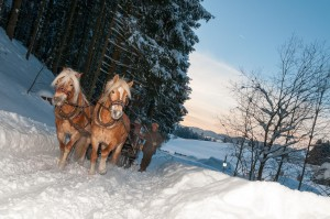 Beim Biohof Schöll geht es mit dem Pferdeschlitten in die Natur. @Biohof Schöll