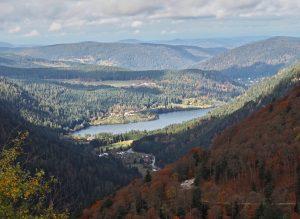 Elsass und Vogesen – dichte Wälder hinter Weinbergen