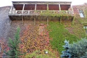 Die historischen Balkone mit Beflanzung