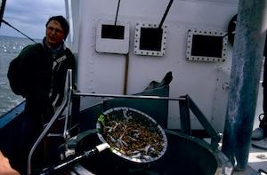 Dithmarschen Krabbenfangfahrt