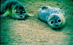 Dithmarschen Seehundaufzuchtstation