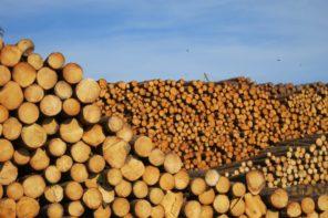 Steinriesen, himmlische Ruhe und viel Holz