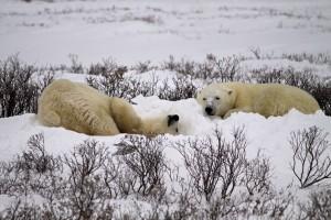 Churchill an der Hudson-Bay – Stadt der Eisbären