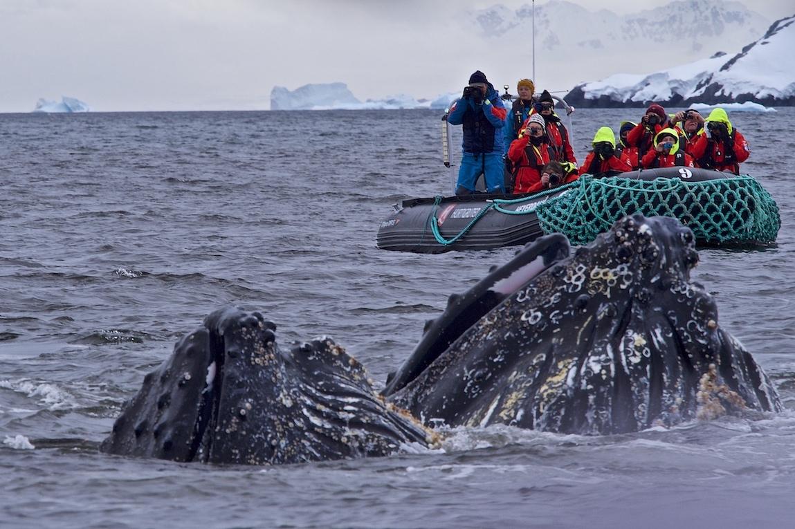Expeditionskreuzfahrten Pinguine Expeditionsseereisen ins ewige Eis