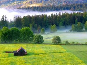 Ein Dorado für Wanderer und Naturfans: Nördlicher Schwarzwald. Foto: Tourismus Nördlicher Schwarzwald