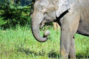 Respektvoller Umgang! Elefanten-Fürsorge im Norden Thailands – ein Erfolgsprojekt?