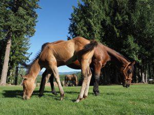 "Idaho – Cowboyalltag im ""Pfannenstiel"""