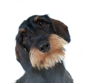 Wenn Menschen-Herzen so weich wie Hundeschnauzen werden