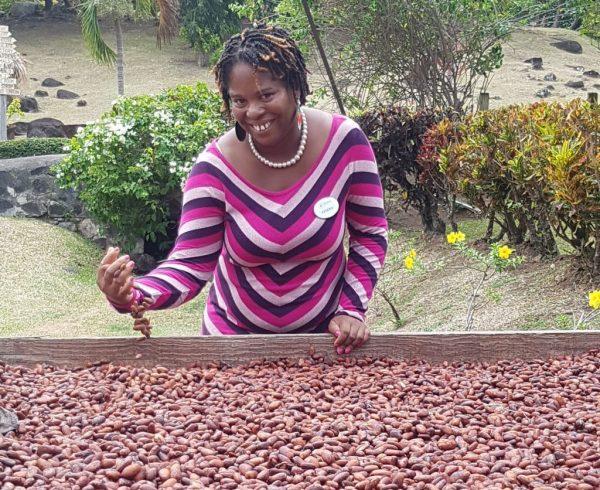 Kendra Alexander greift auf Belmont Estate in getrocknete Kakaobohnen - die Basis für feine Schokolade. Bilder: Bauroth