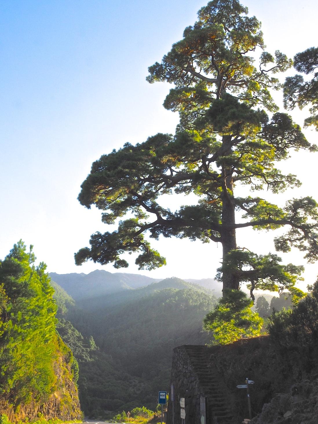 Kanaren Urwald Vulkane La Gomera La Palma Nationalparks