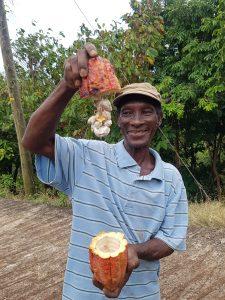 Robert Calliste zeigt eine Kakaofrucht. Das Weise (oben) sind die Bohnen.