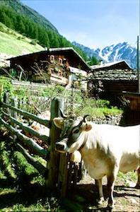 Suedtirol Bauernhof