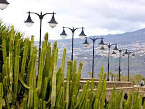 Teneriffa Puerto de la Cruz Kakteen Laternen-Allee 2016-03-22 Foto Elke Backert