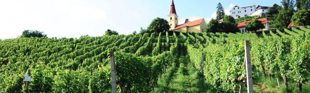 Weingut_Winkler-Hermaden_Wein