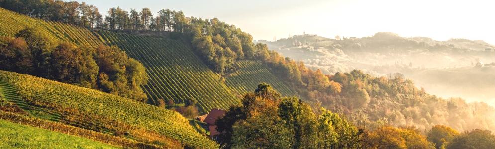 Weingut_Wohlmuth_Wein
