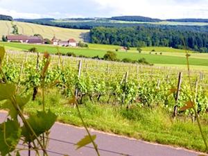 Weinlage Satzenberg Konrad Schloer und Alte Grafschaft 2016-06-16 Foto Elke Backert
