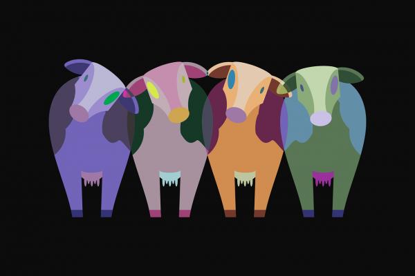 cows-1789577_1280