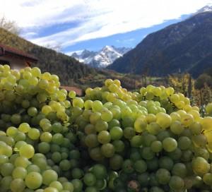 In Prutz liegt Terra Austriacus, Österreichs höchstes Weingut,  © Tiroler Oberland