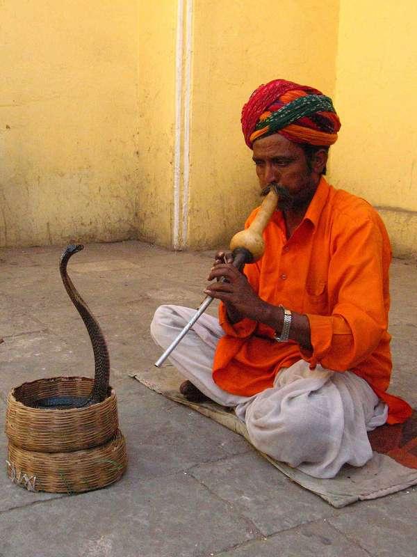 Jaipur, Schlangen beschwörer mit seiner indischen Kobra