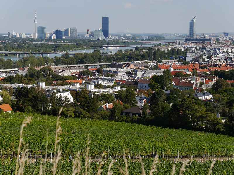 k-Blick vom Weingarten auf dem Nussberg über Wien und die Donau _ Renate Wolf-Götz