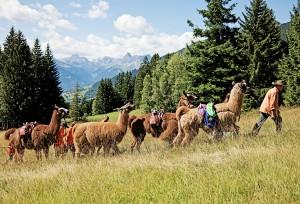 Lama-Trekking-Tour zum Kristberg. Foto: Markus Gmeiner Schruns Montafon Tourismus