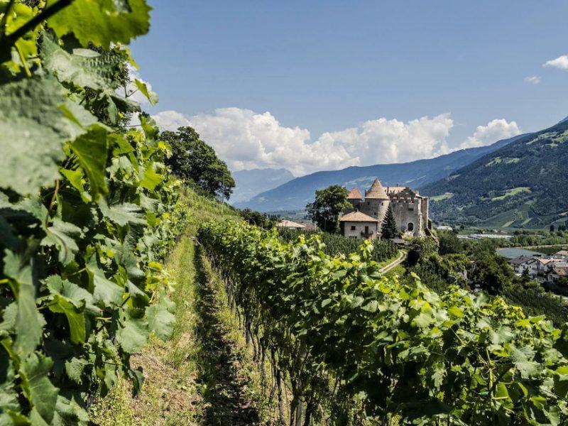 via-vinum-venostis-vinschgau